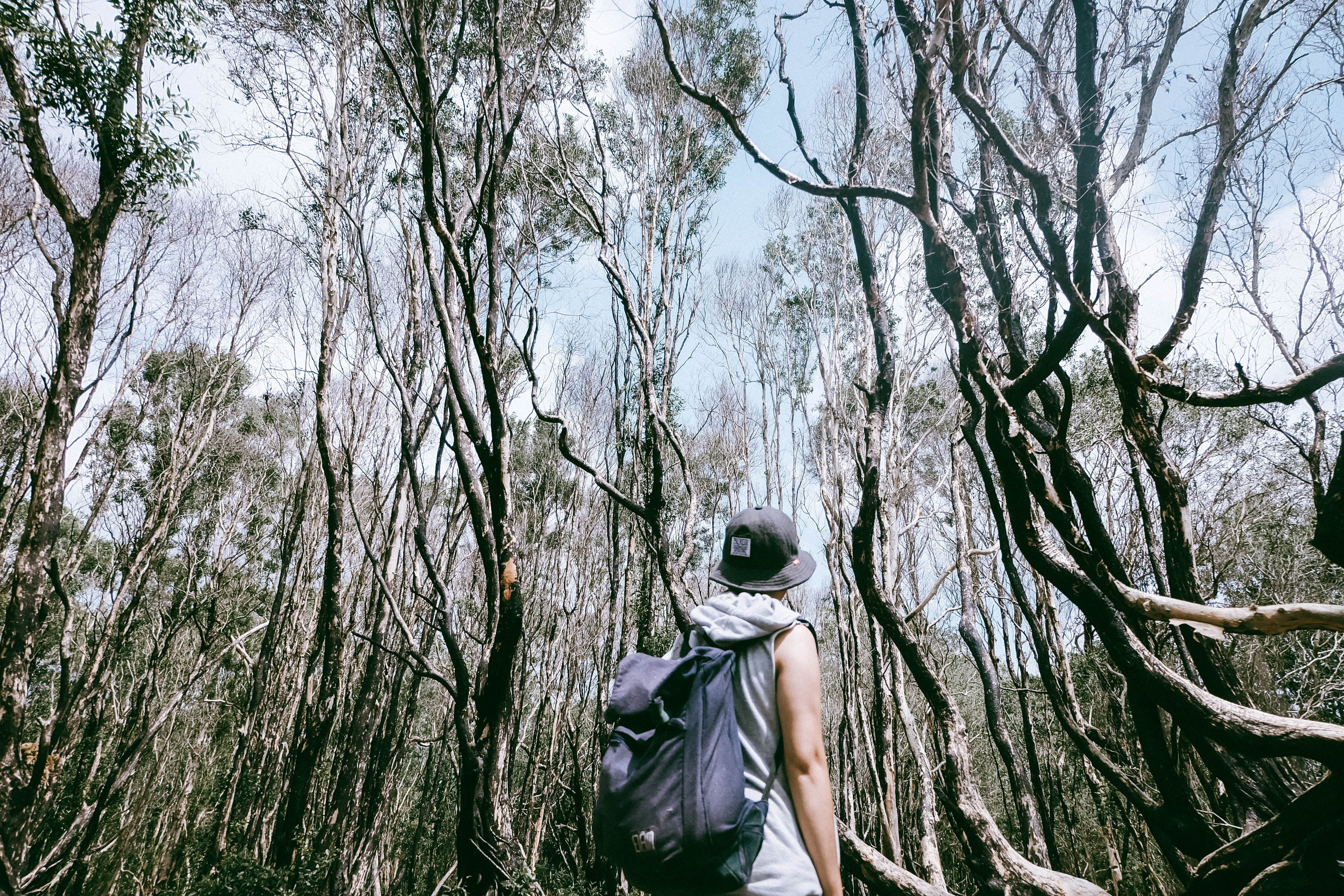 man carrying black backpack surrounded by trees at daytime