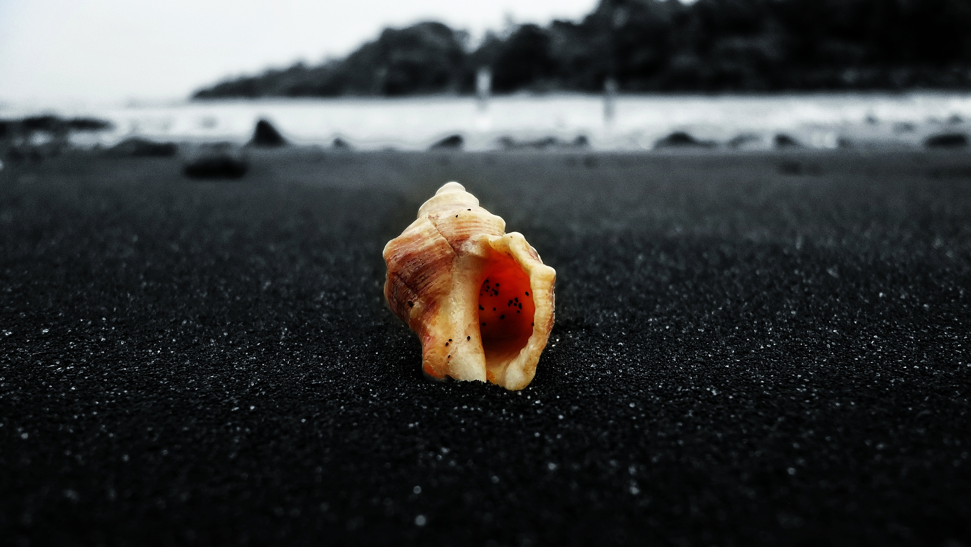 the sea shell stories