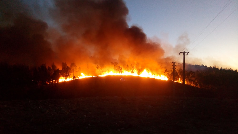 landscape photo of burning forest
