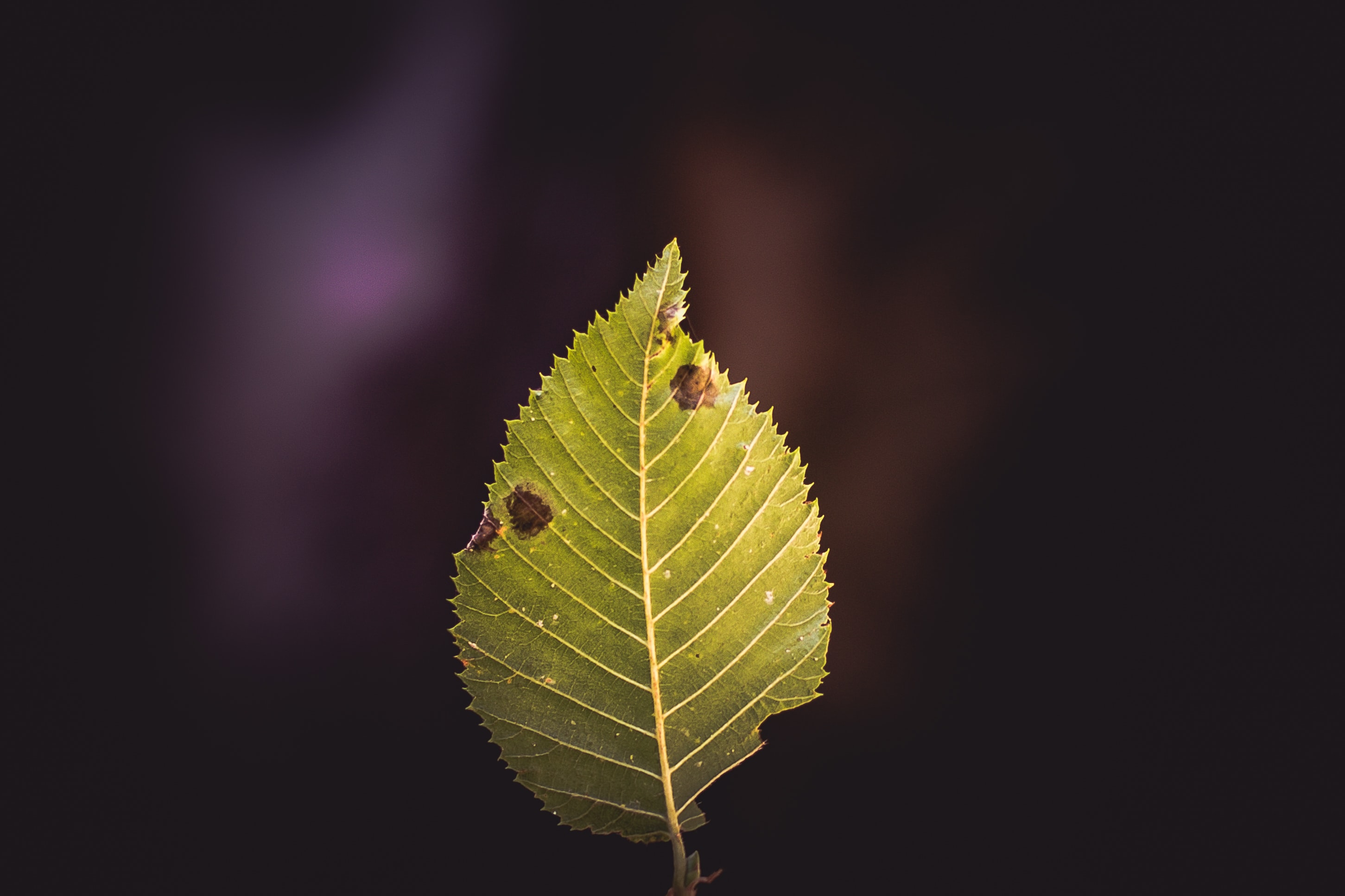 closeup photography of green leaf