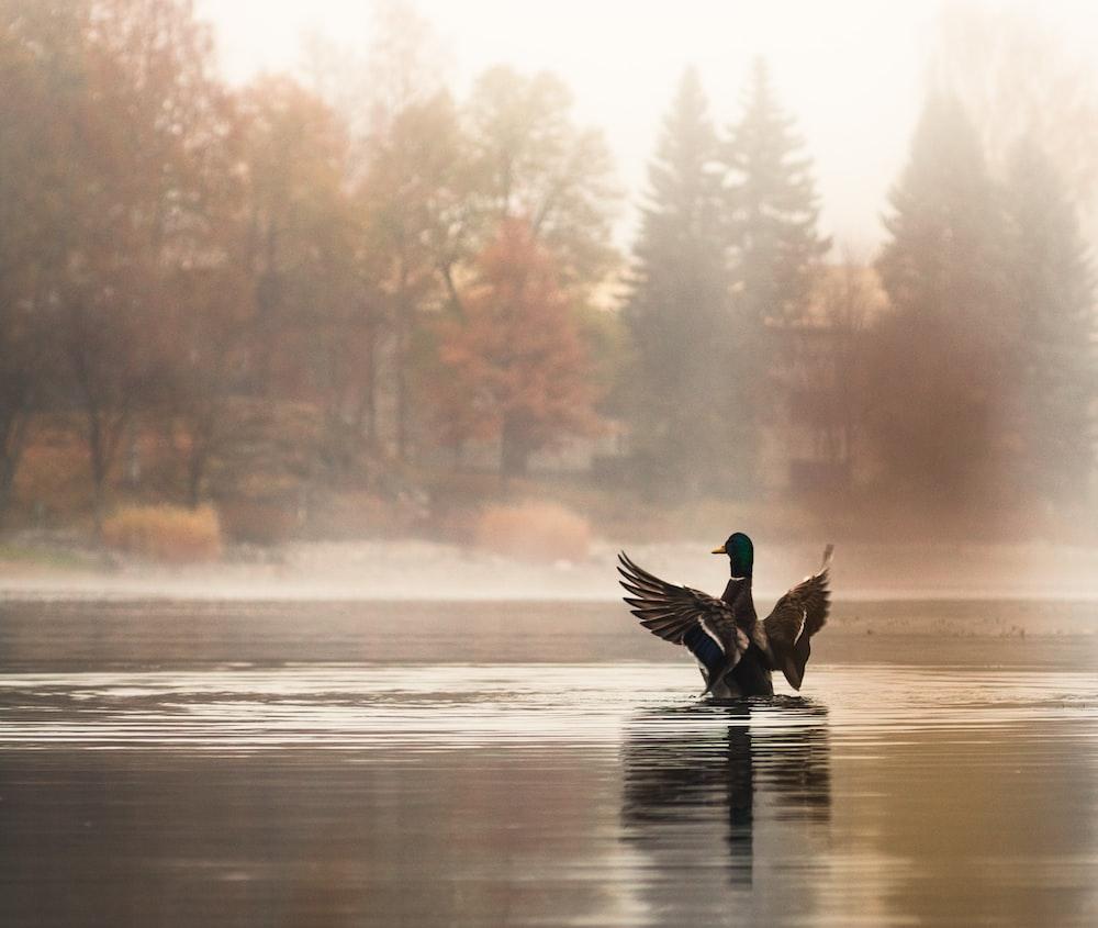 brown duck on body of water beside trees