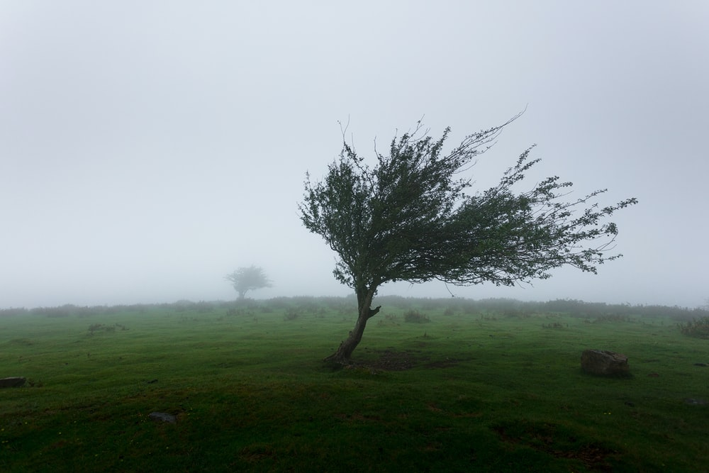 trees with wind photo