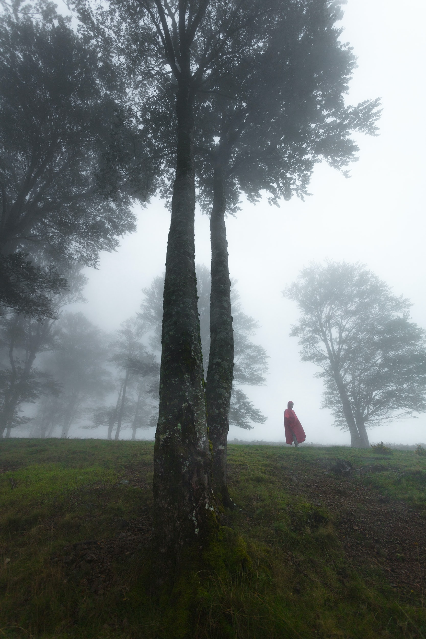 person in red cape standing near field of trees