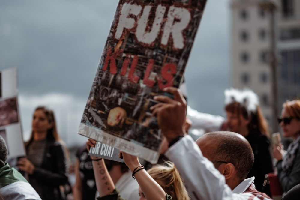 person holding Fur Kills poster