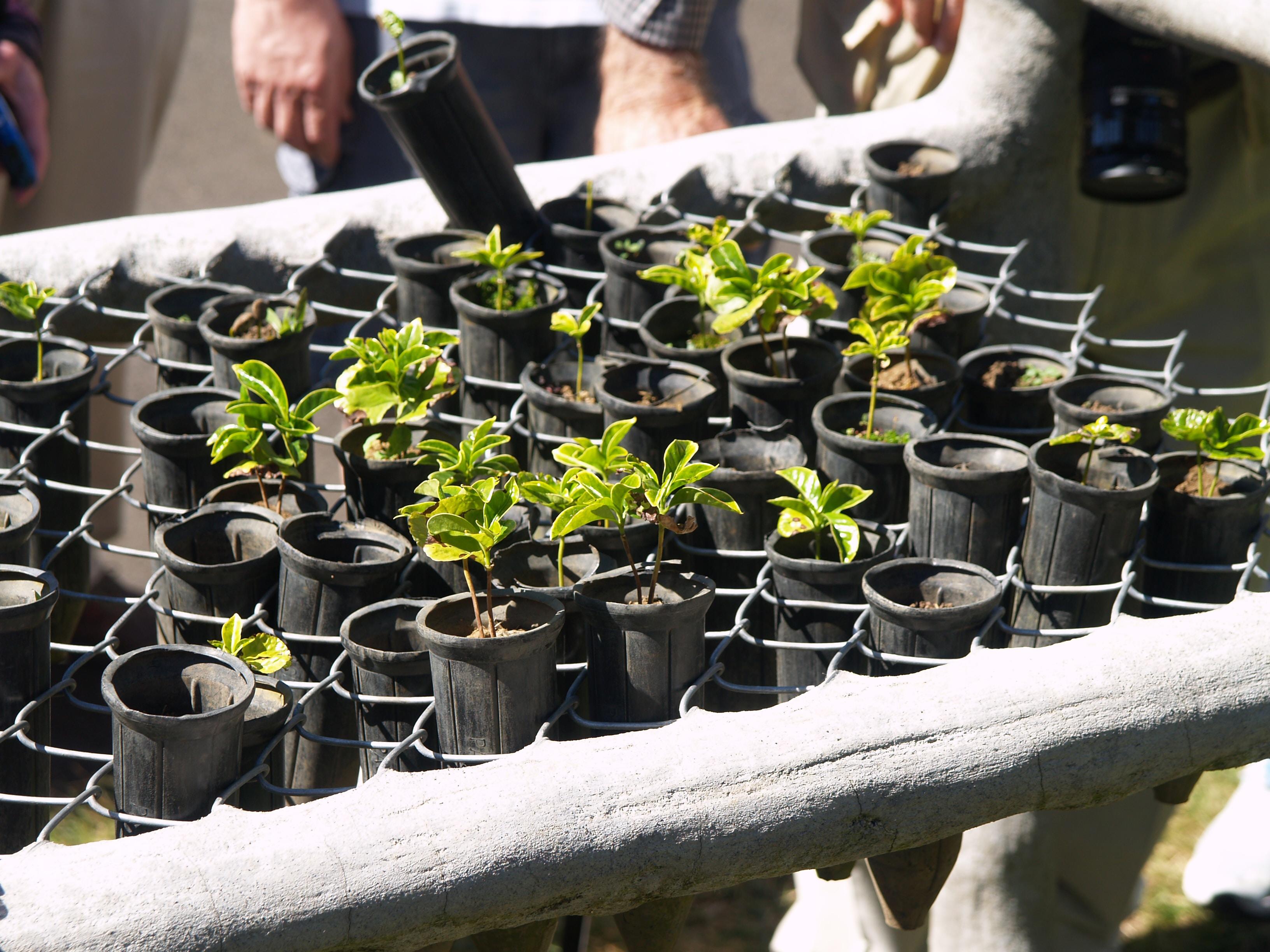 green leafed plant on black pots