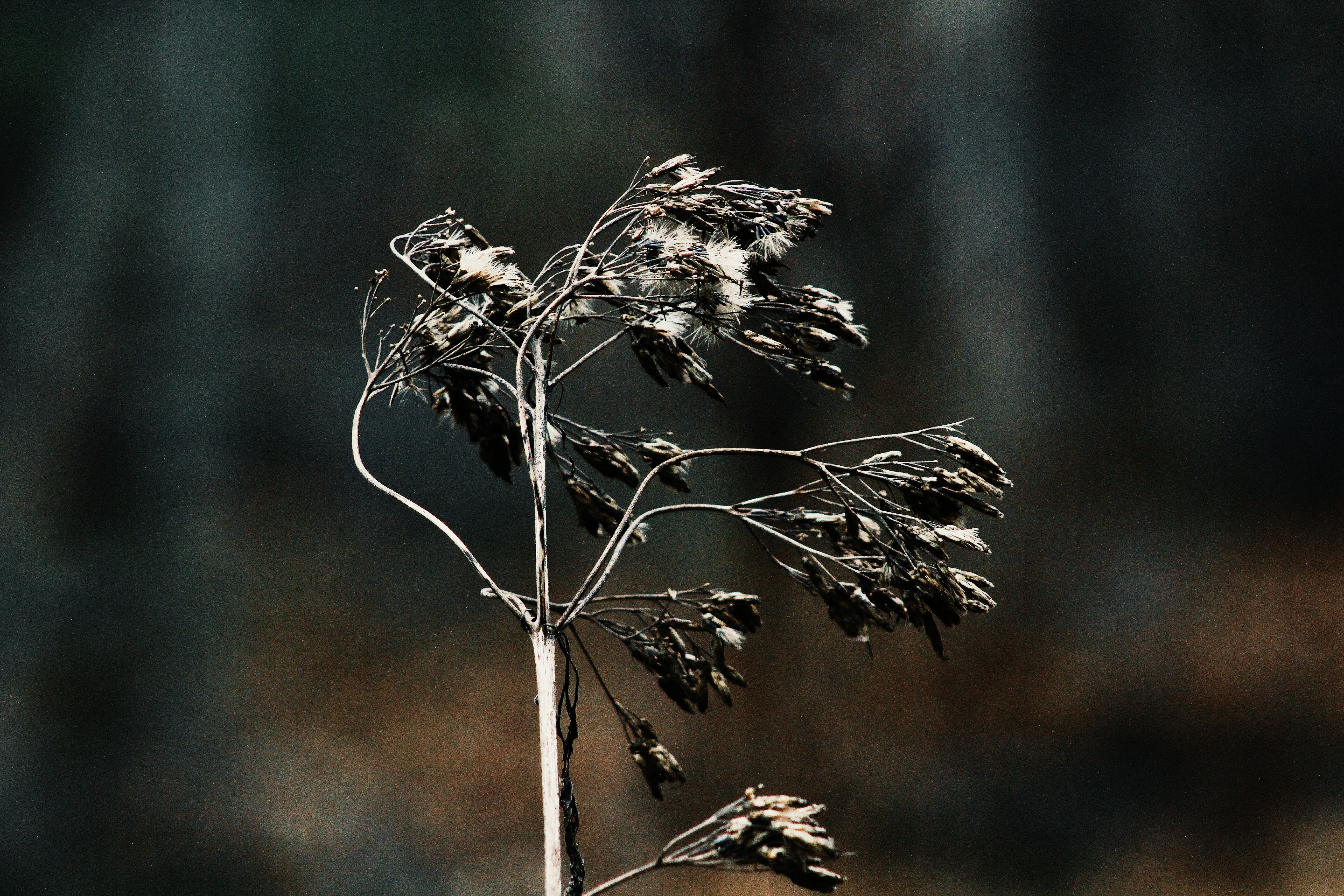 gray leaves with stem