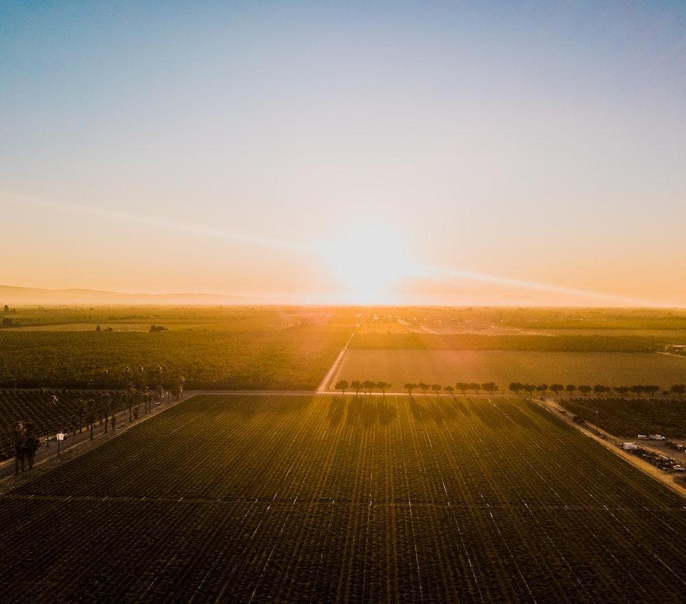 green field under golden sky
