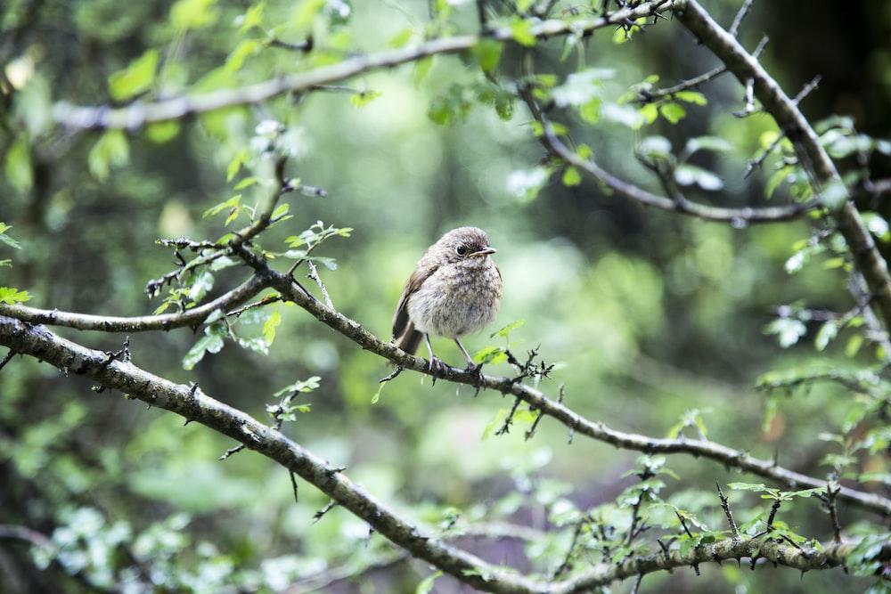 brown bird on tree stem