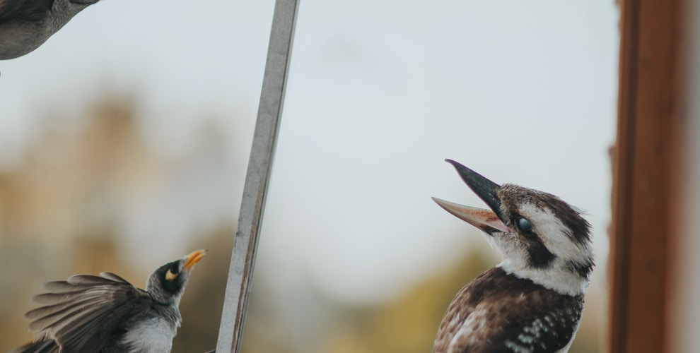 focus photography of brown-and-white bird on line
