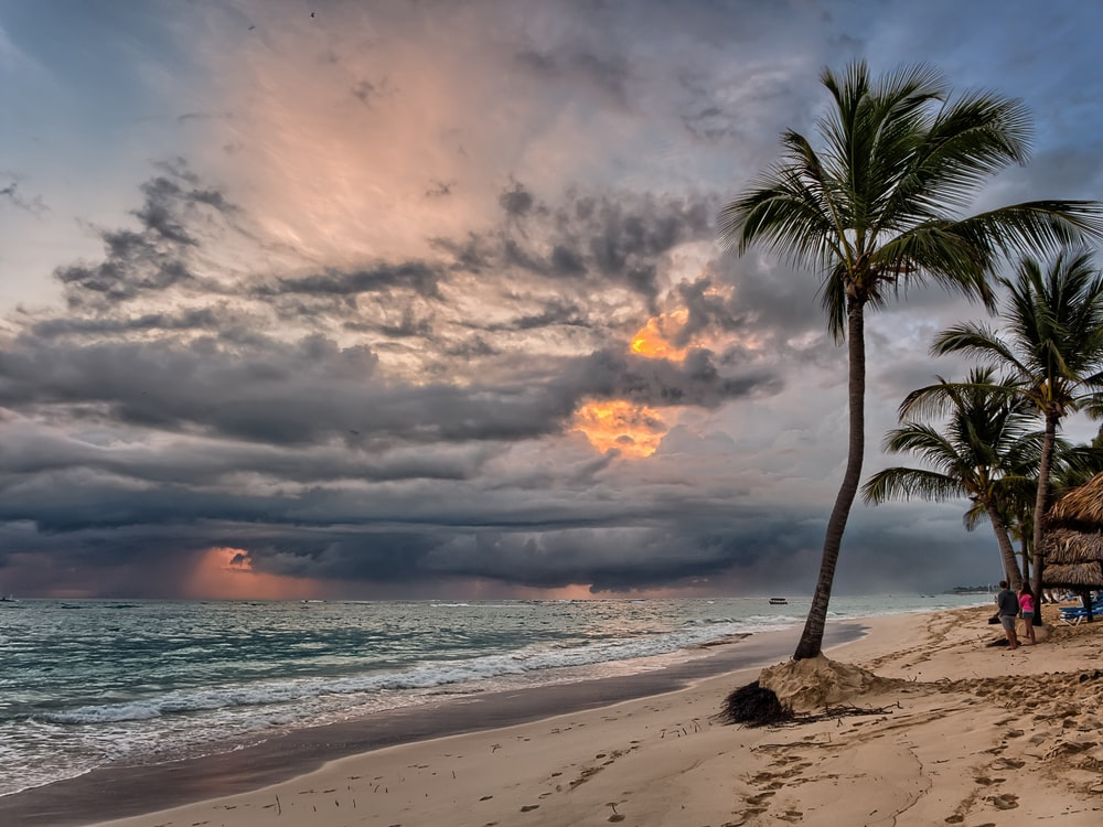 palm tree near sea water photo during golden hour