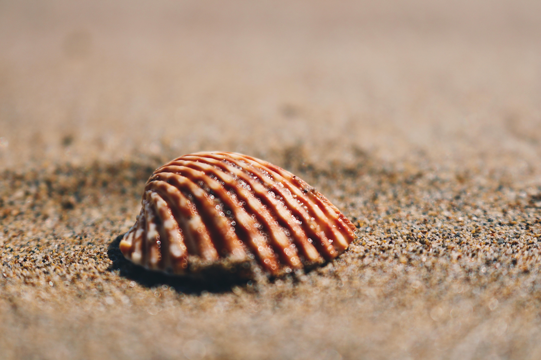 brown seashell on sand