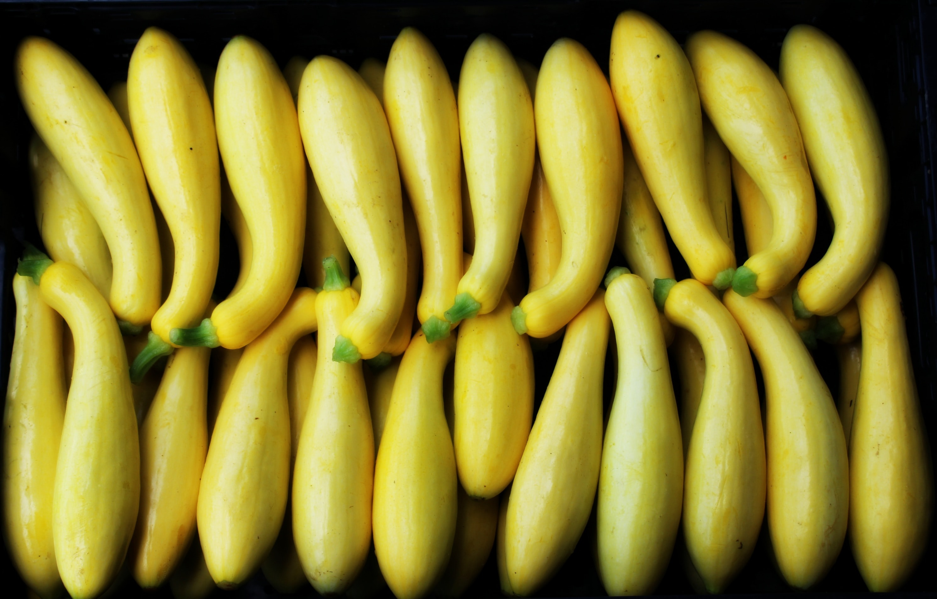 line of yellow bottle gourd lot