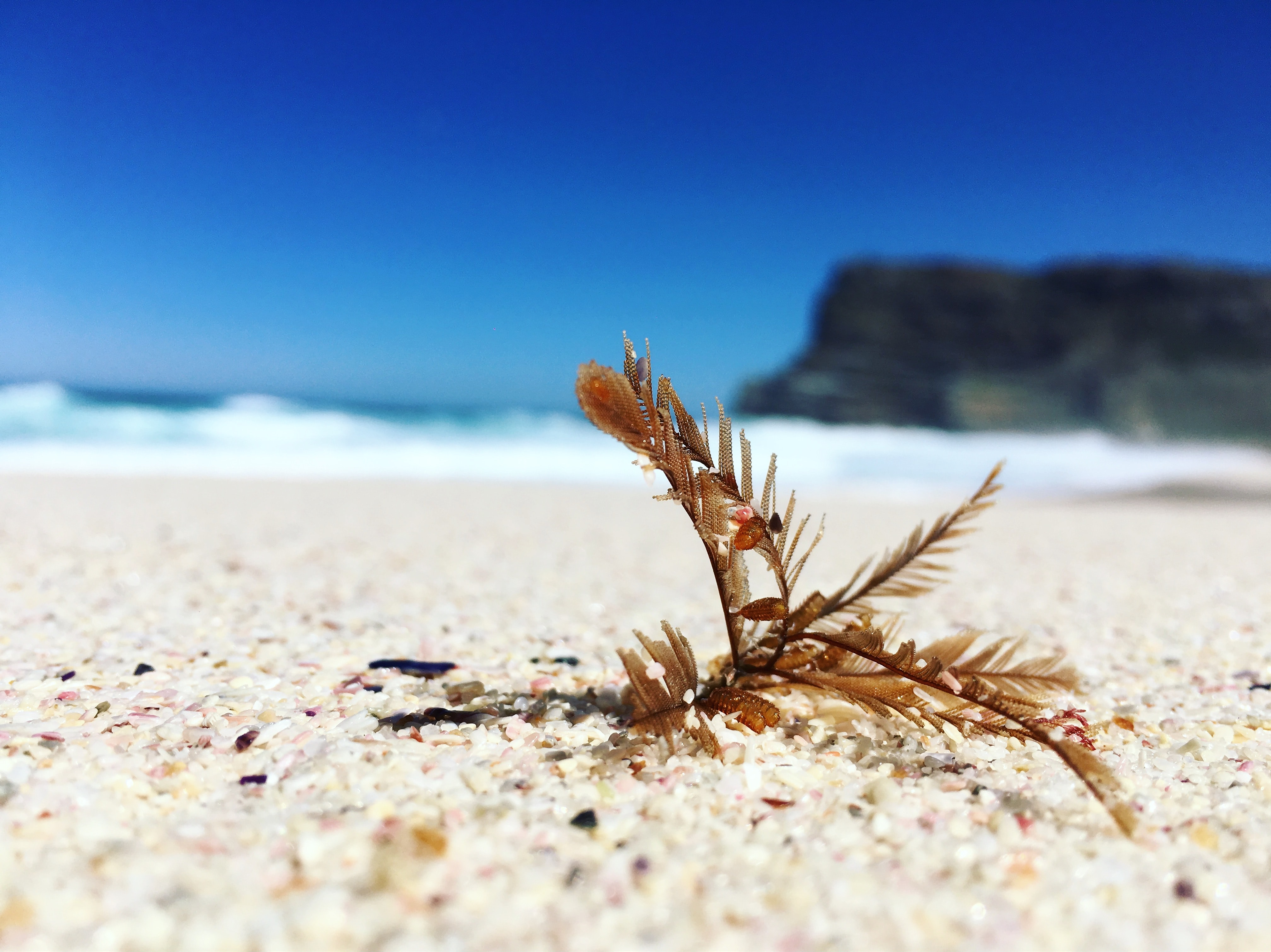 selective focus photography of brown leafed plant on beach shore