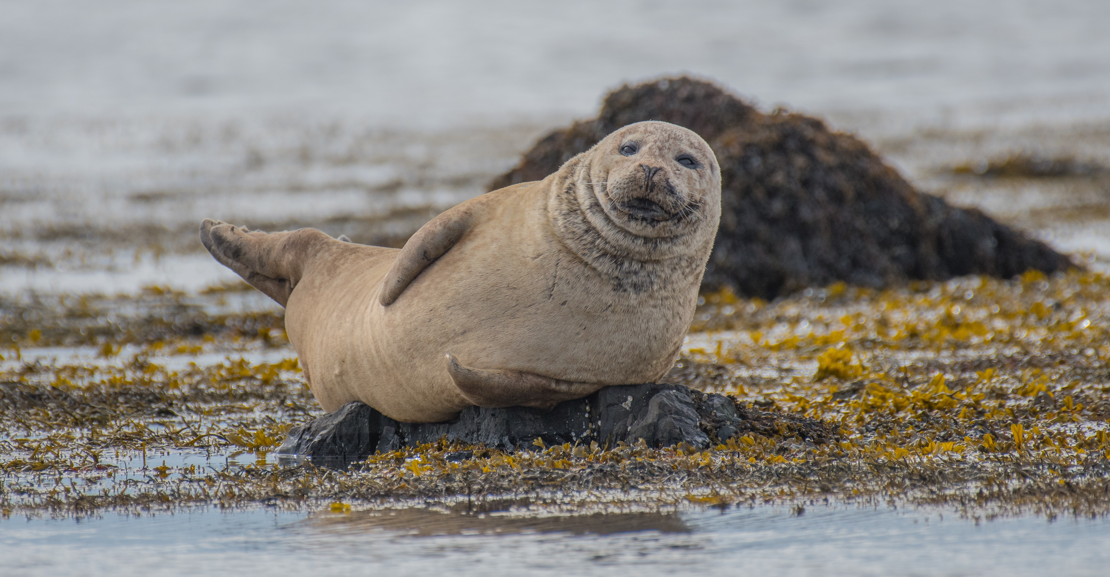 selective focus photography of seal lying on ground