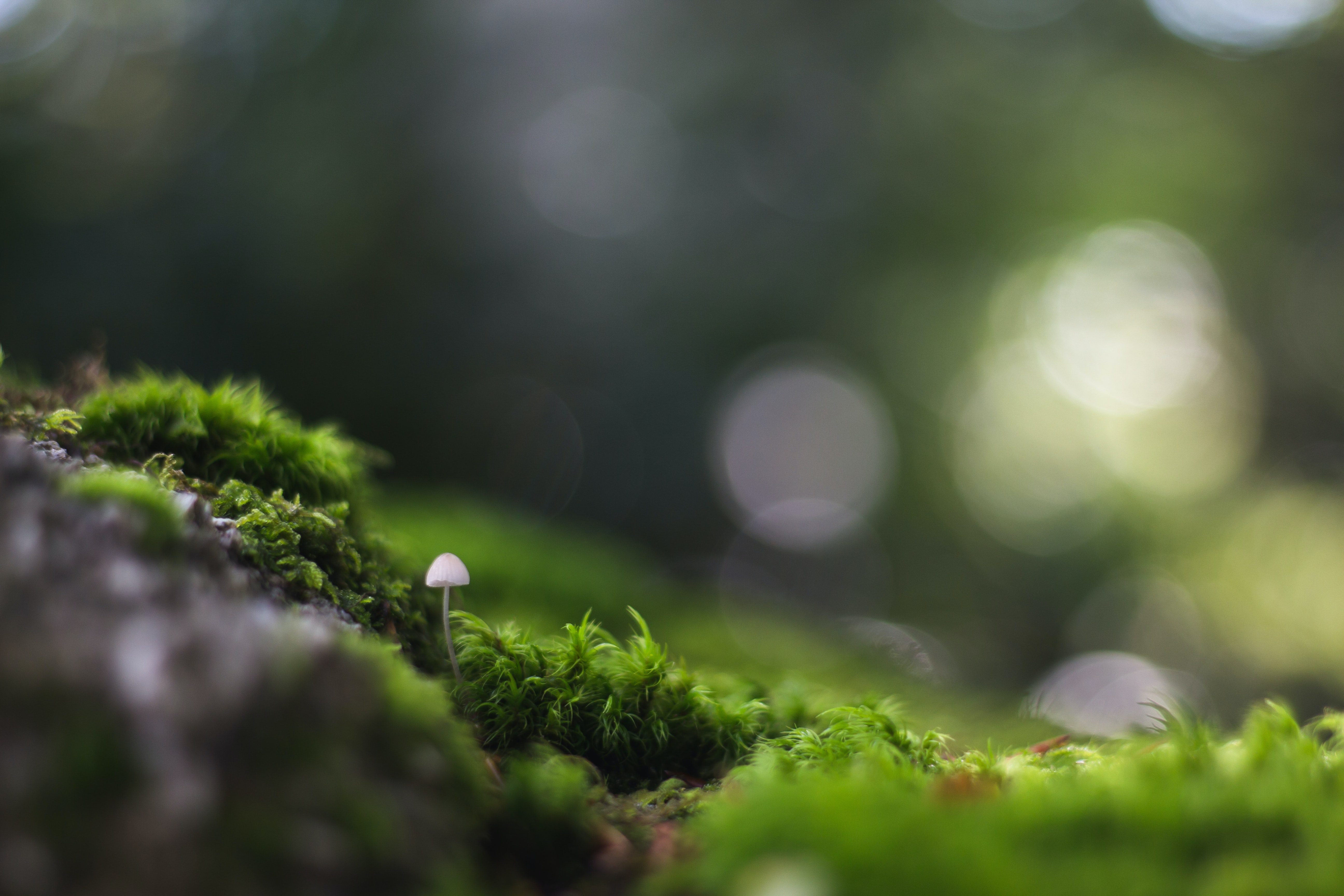 selective photography of white mushroom near green grass