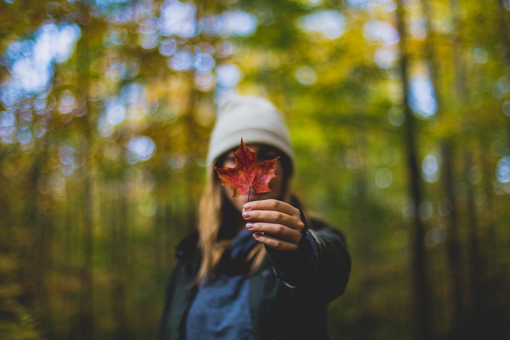 wide aperture photography of woman holding maple leaf to camera during daytime