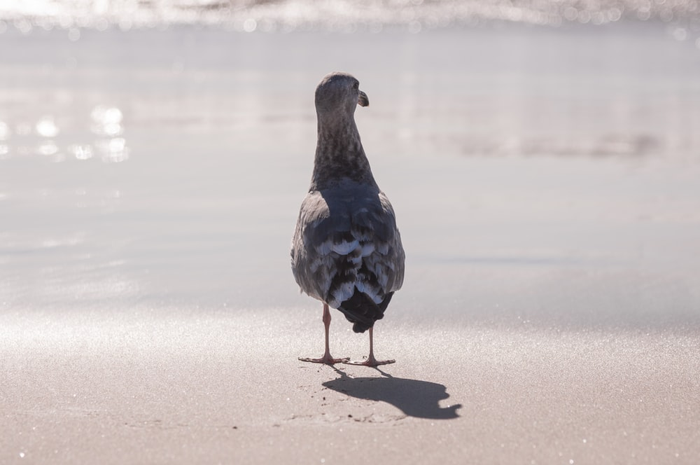 grey and white bird standing in front of grey calm body of water during daytime
