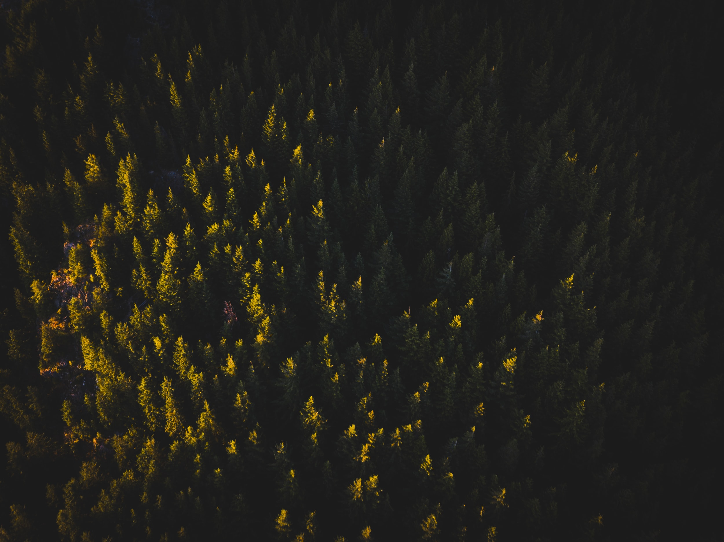 aerial photo of trees