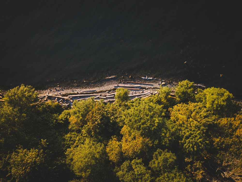 aerial photography of seashore surrounded with trees