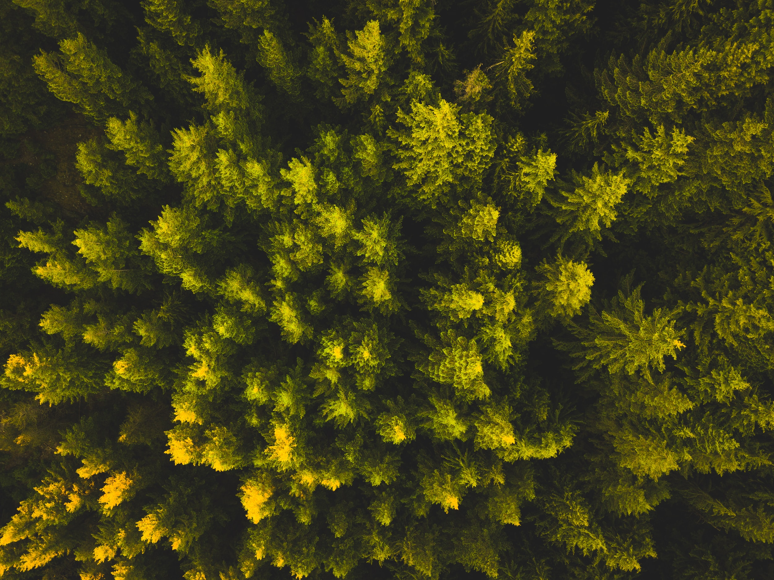 aerial view photography of green leaf trees