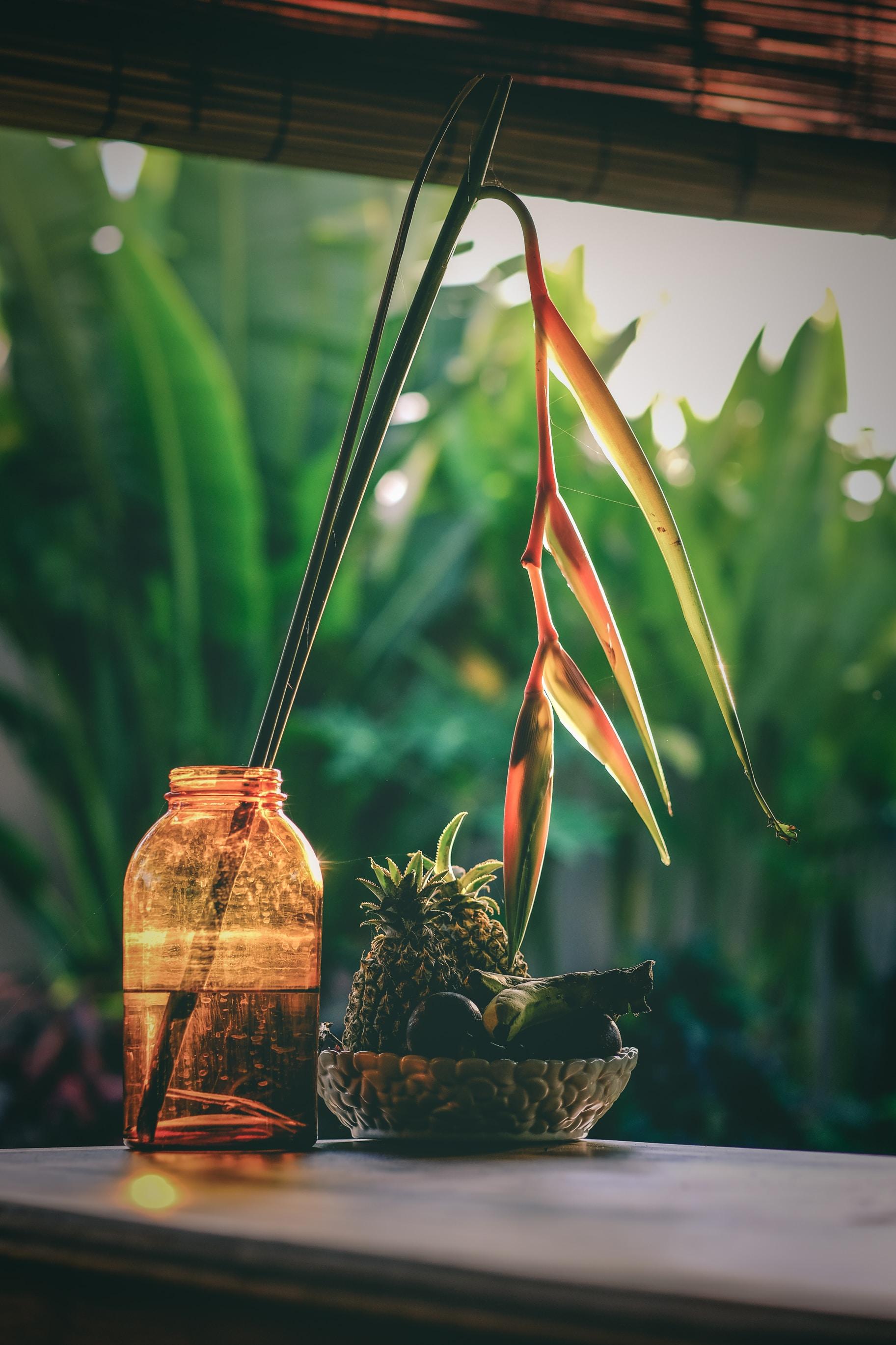 birds of paradise plant on amber glass jar