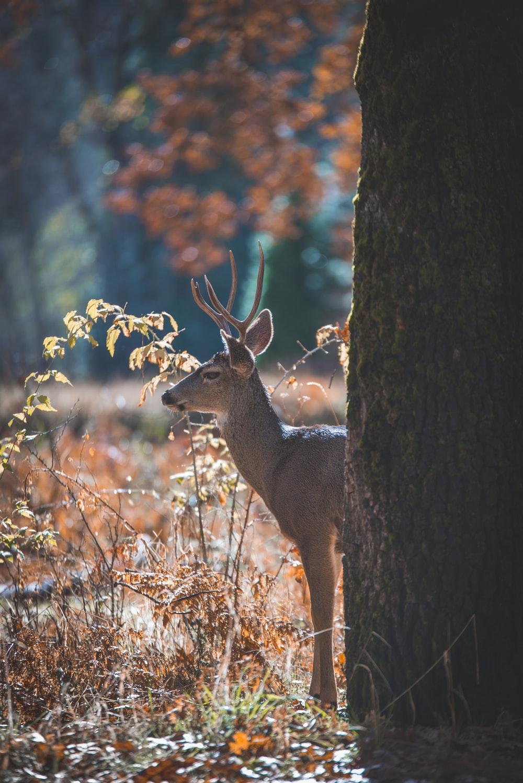 deer next to tree trunk