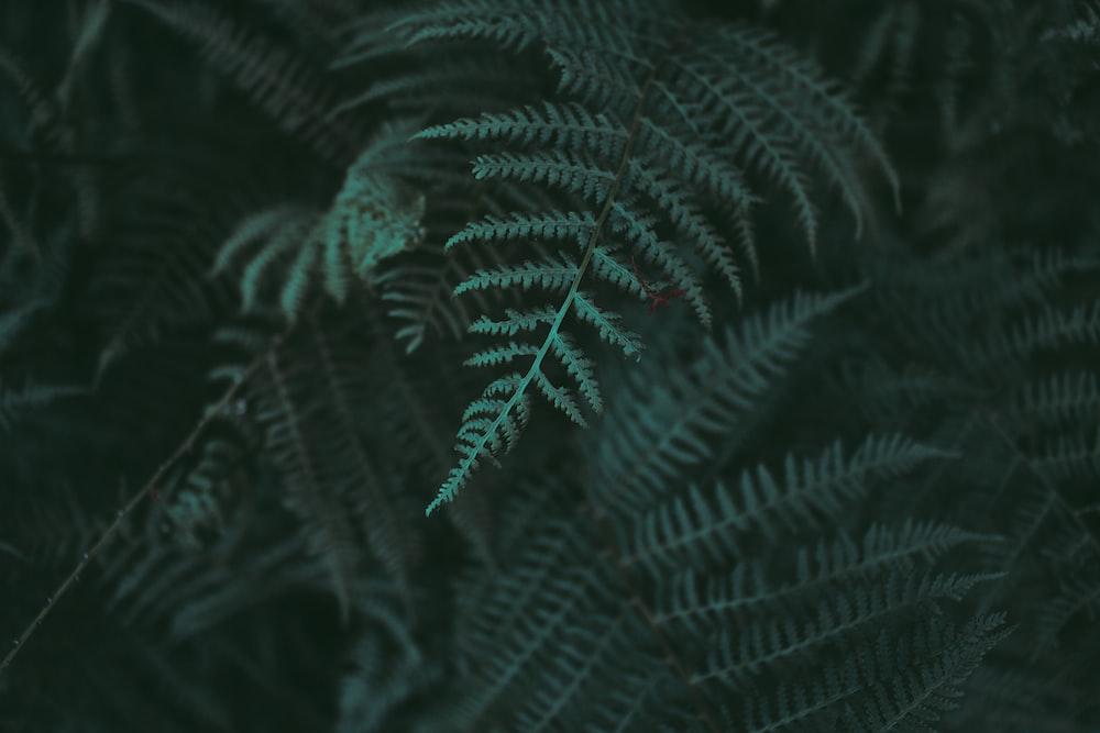 closeup photo of green fern plant