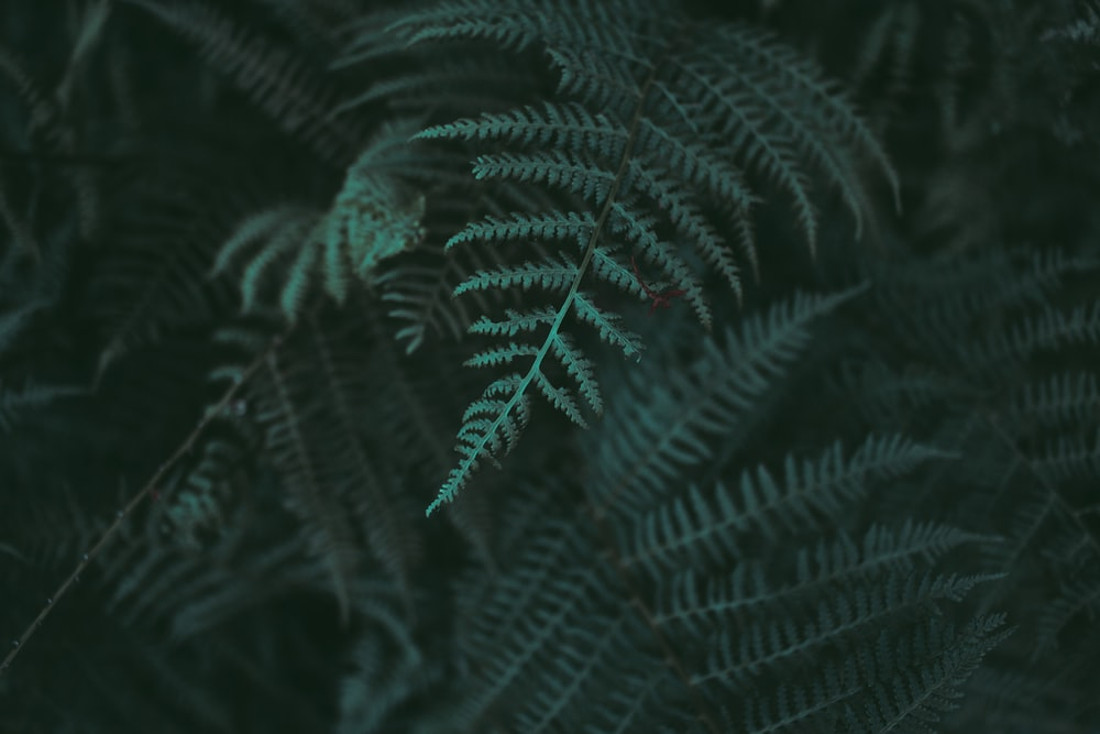 closeup photo of green fern plant