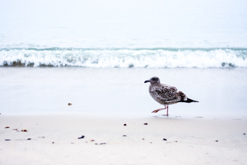 short-beak bird on beach
