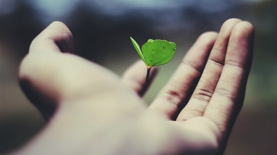 floating green leaf plant on person's hand life zoom background