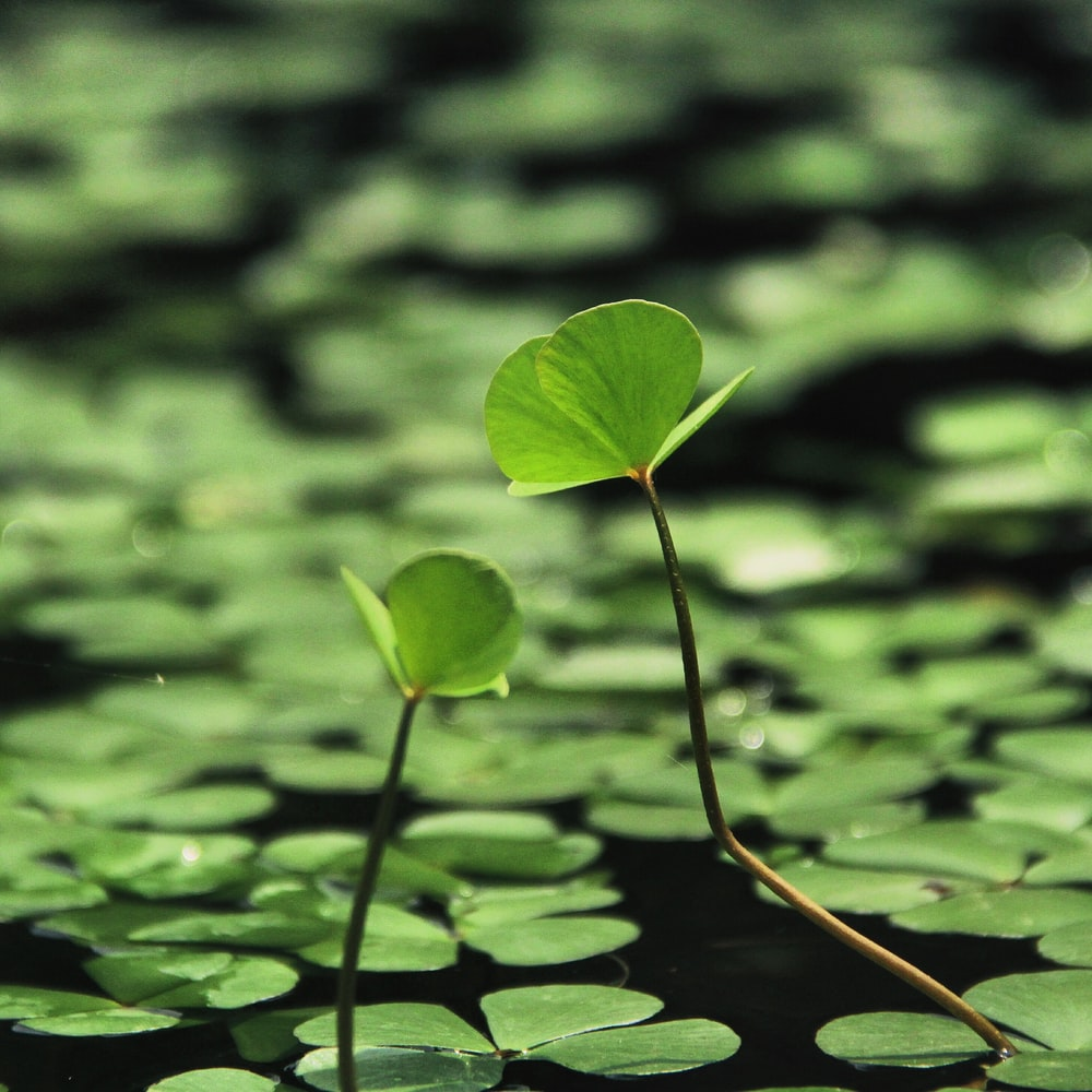 shallow focus photography of plants on water during day