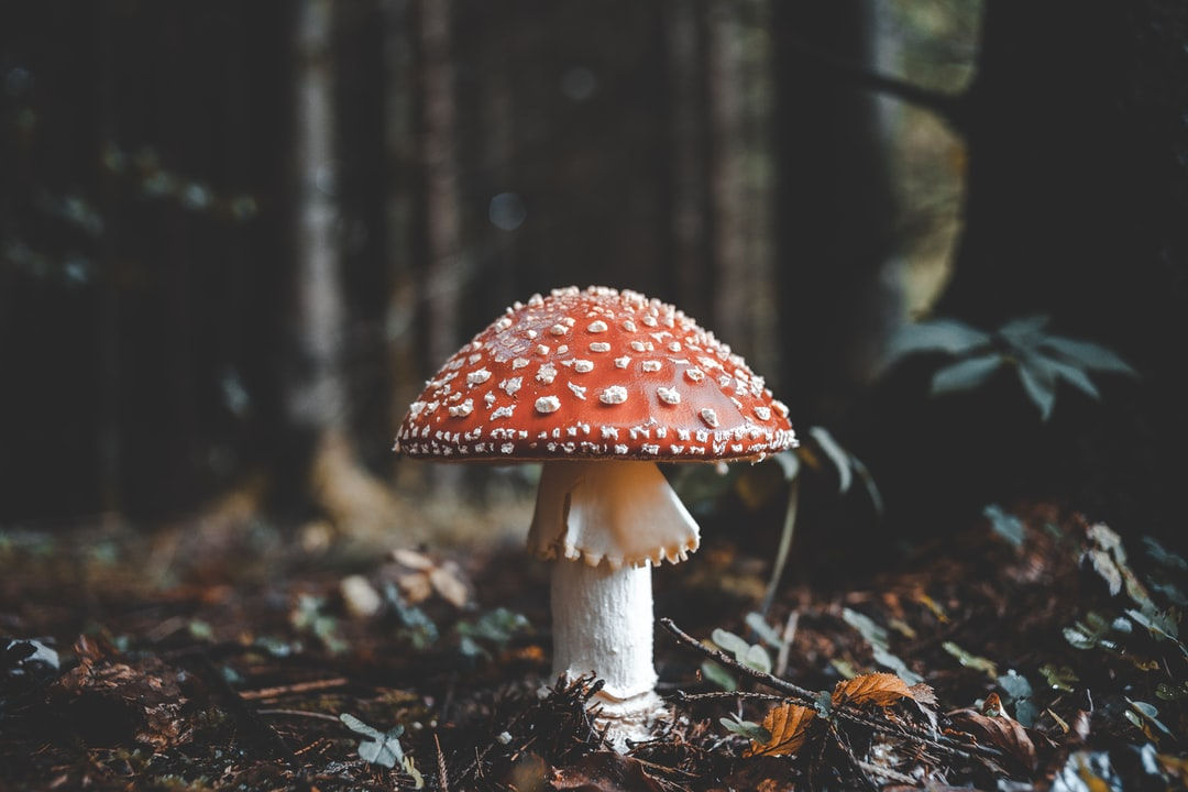 500 Mushroom Pictures Hd Download Free Images On Unsplash