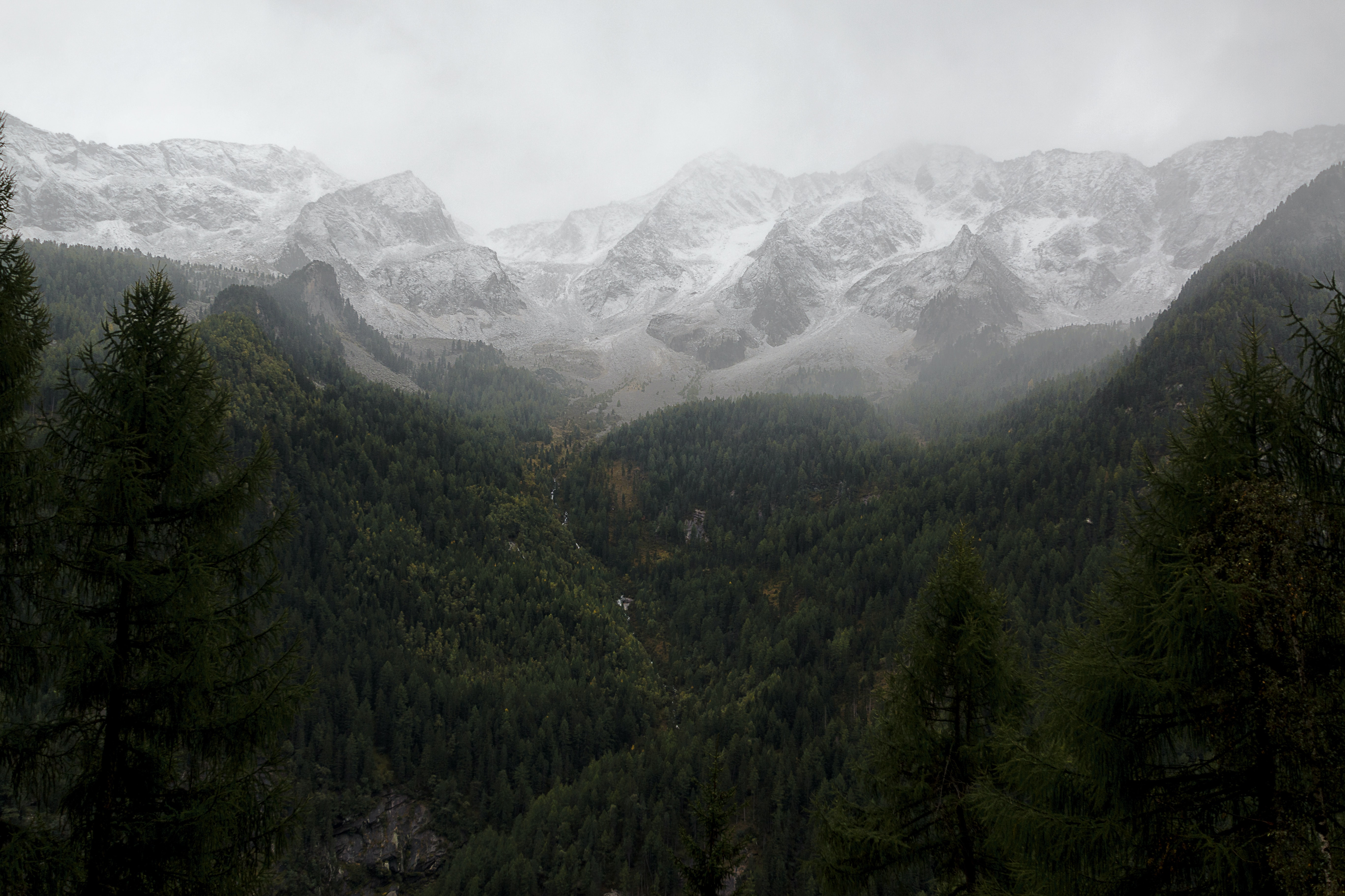 photo of green pine trees near snow capped mountain
