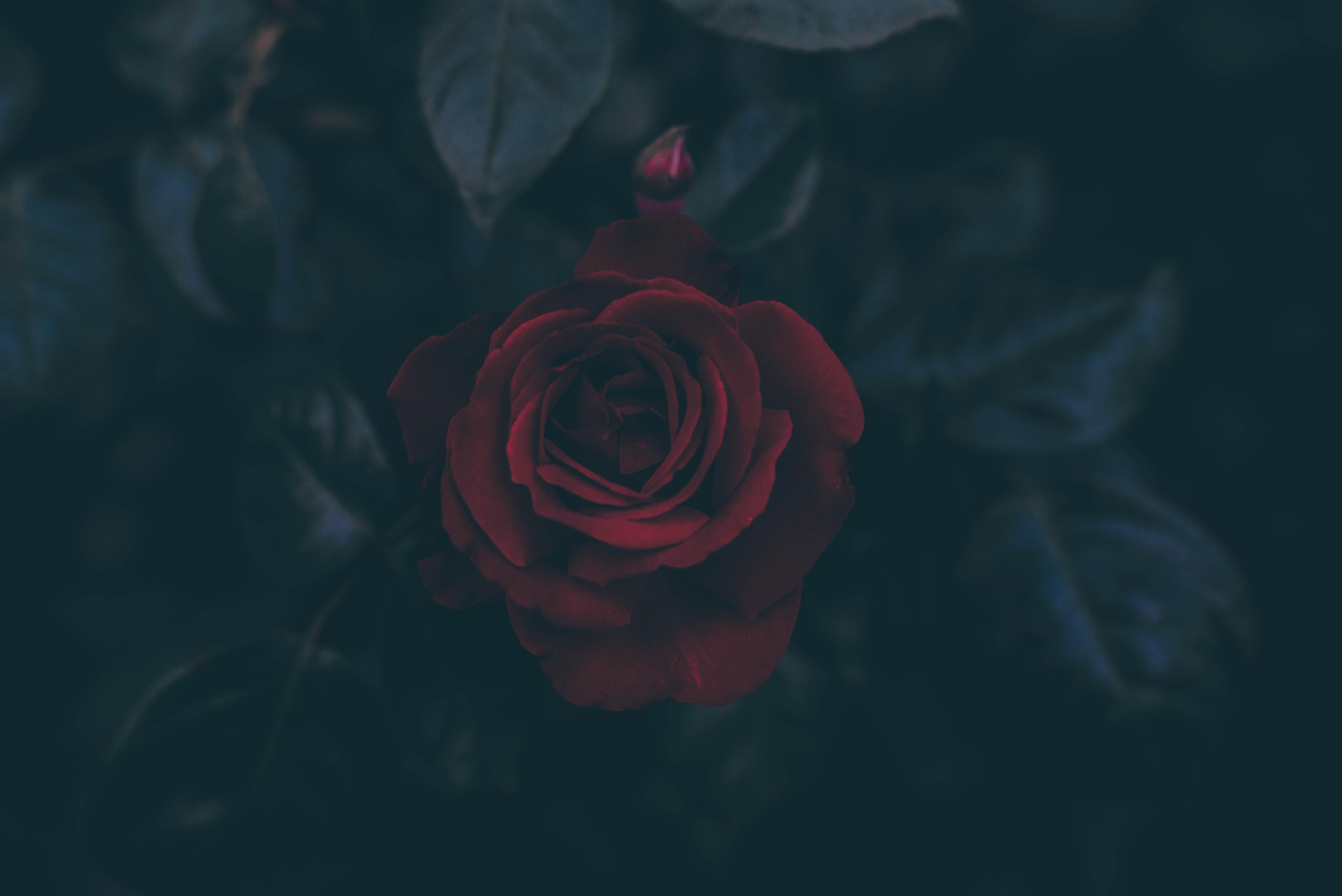 Soft Petals & Sharp Thorns stories