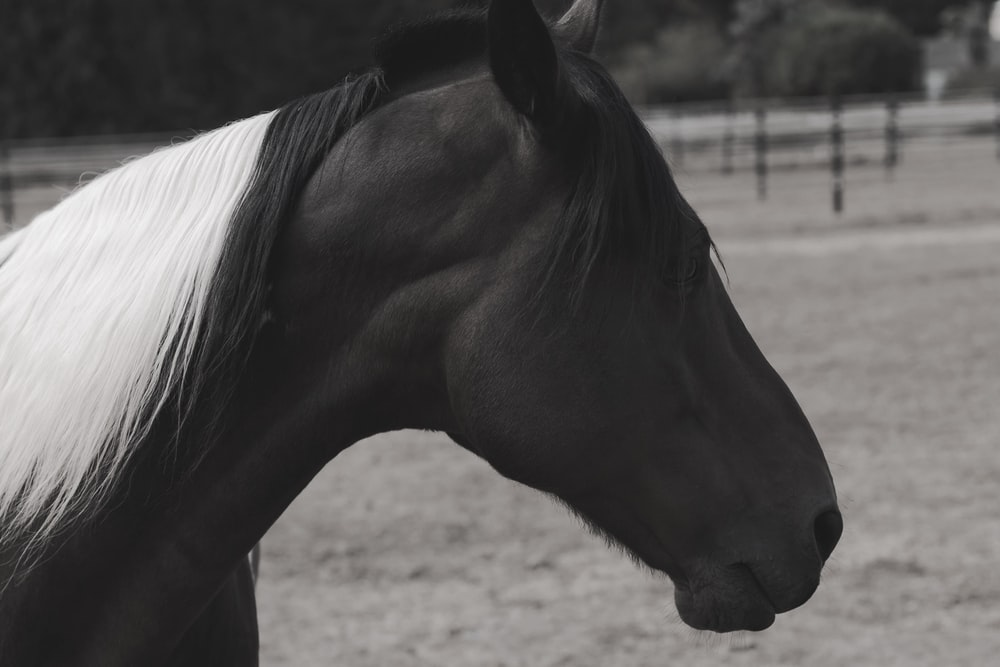 close up photo of black horse