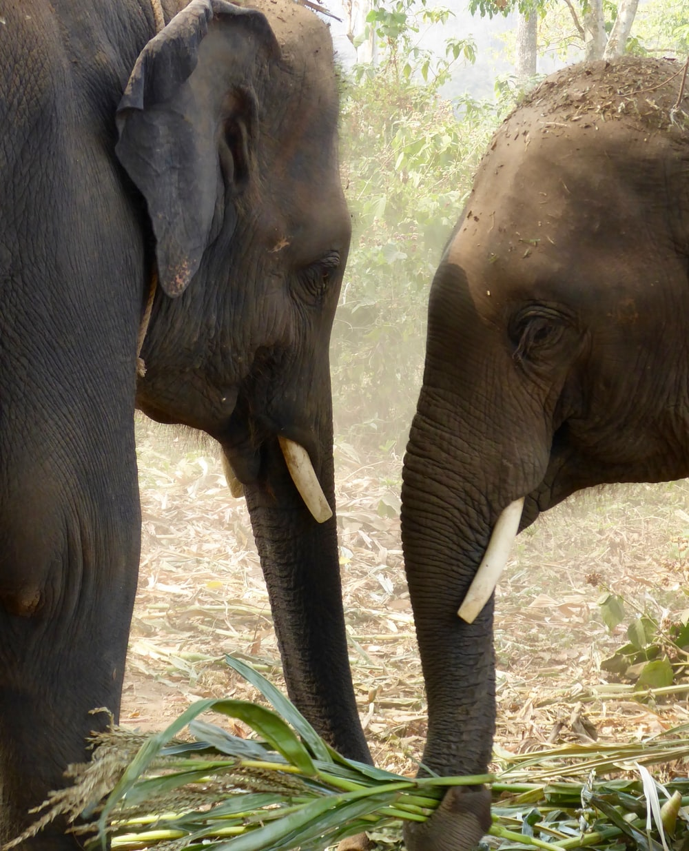 two black and brown elephants facing each other at daytime