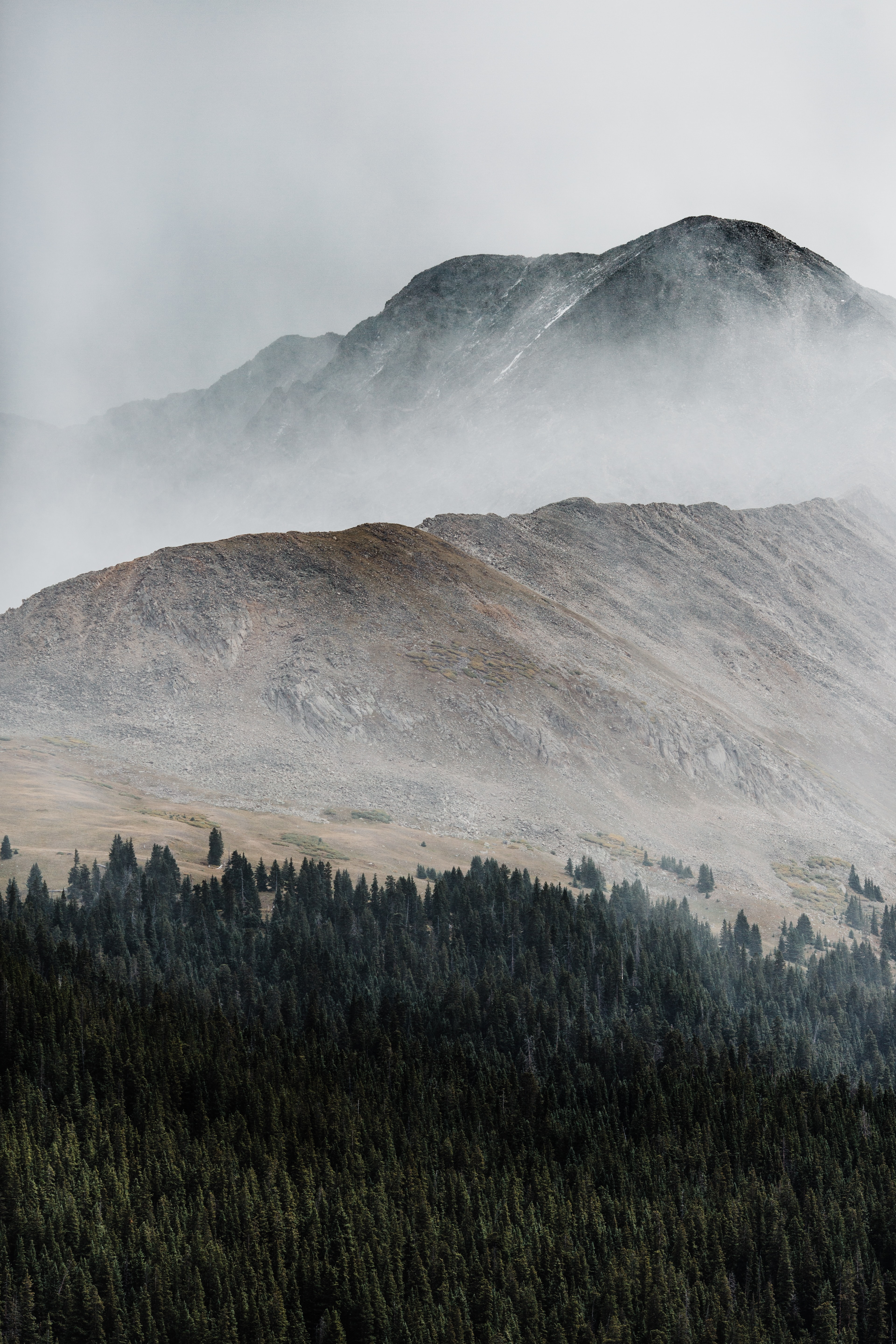 pine trees and rocky mountain surrounded with fog