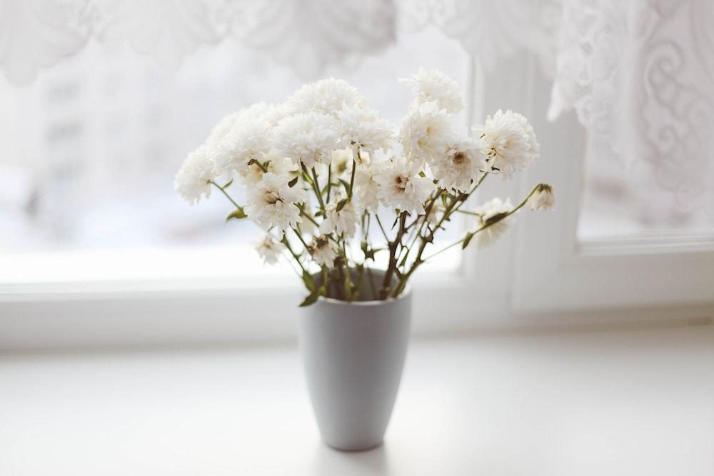 white petaled flower in vase