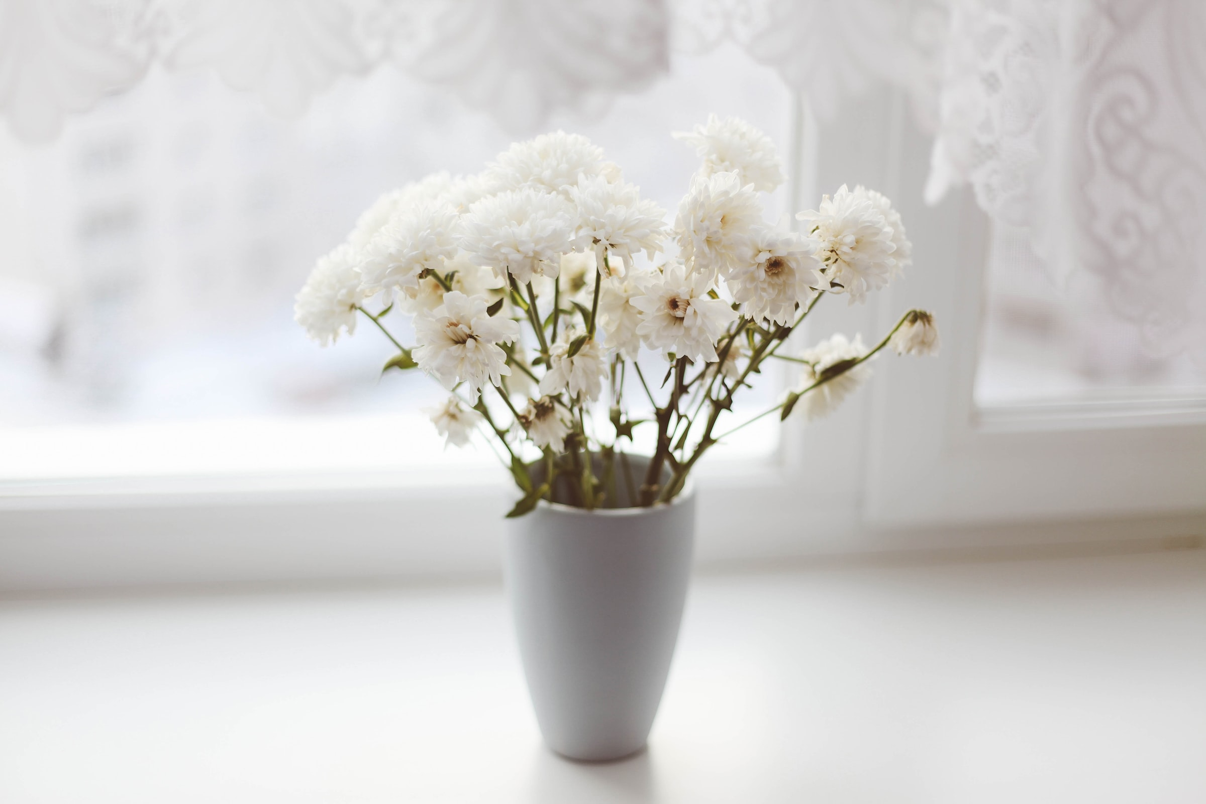 white petaled flower in vase