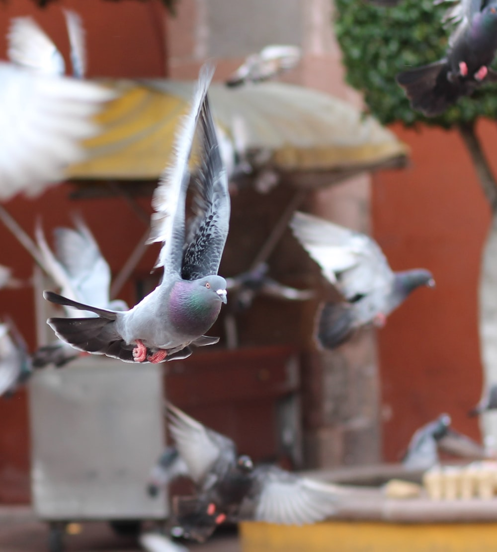 gray flying pigeon in bokeh photography