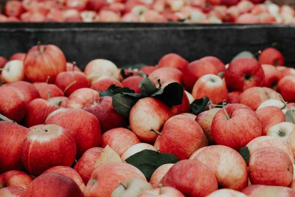 bunch of apples
