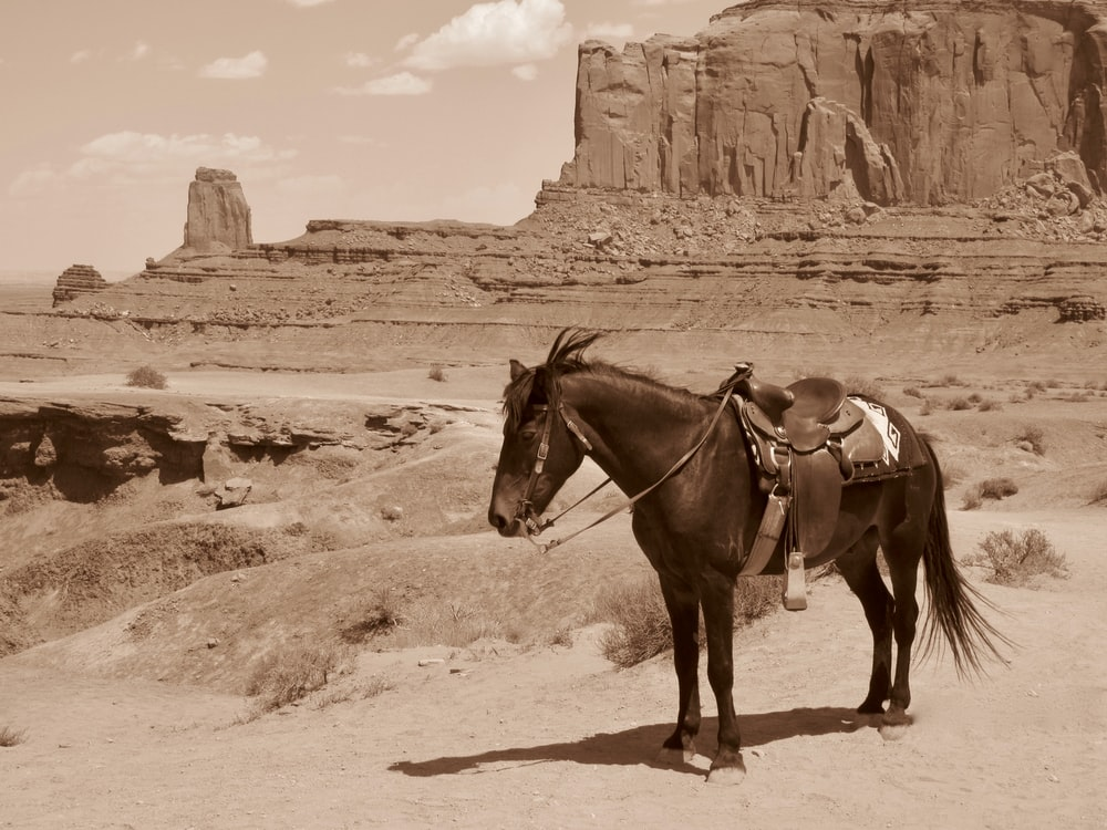 sepia scale of hors