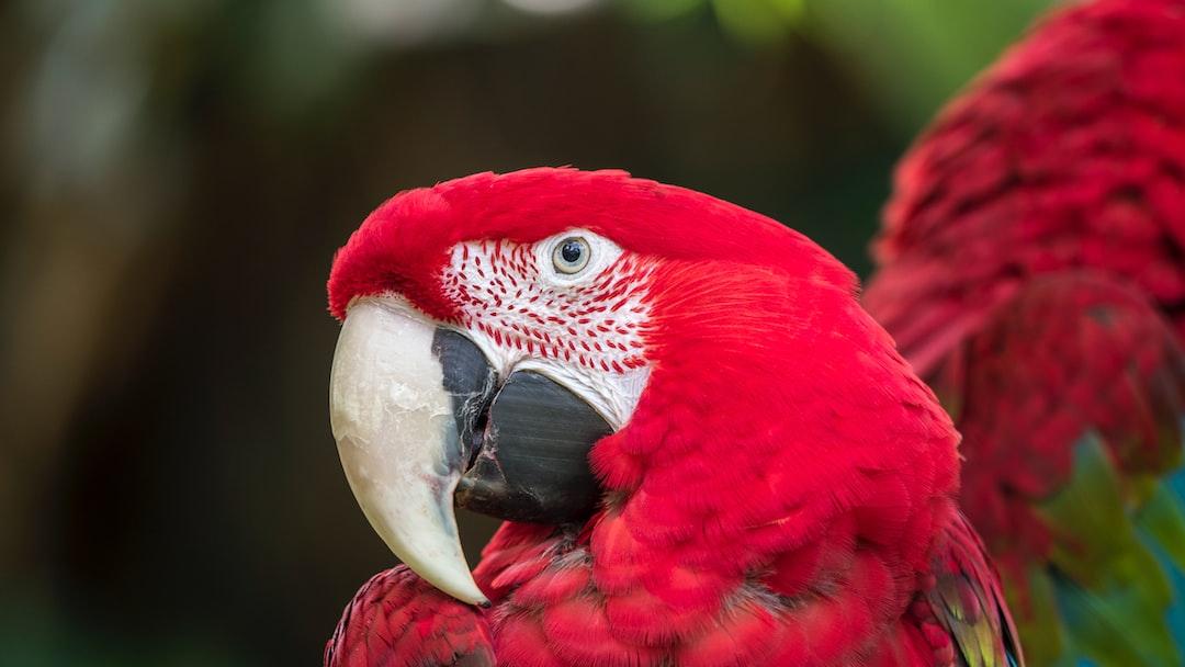 The Parrots of Puerto Vallarta