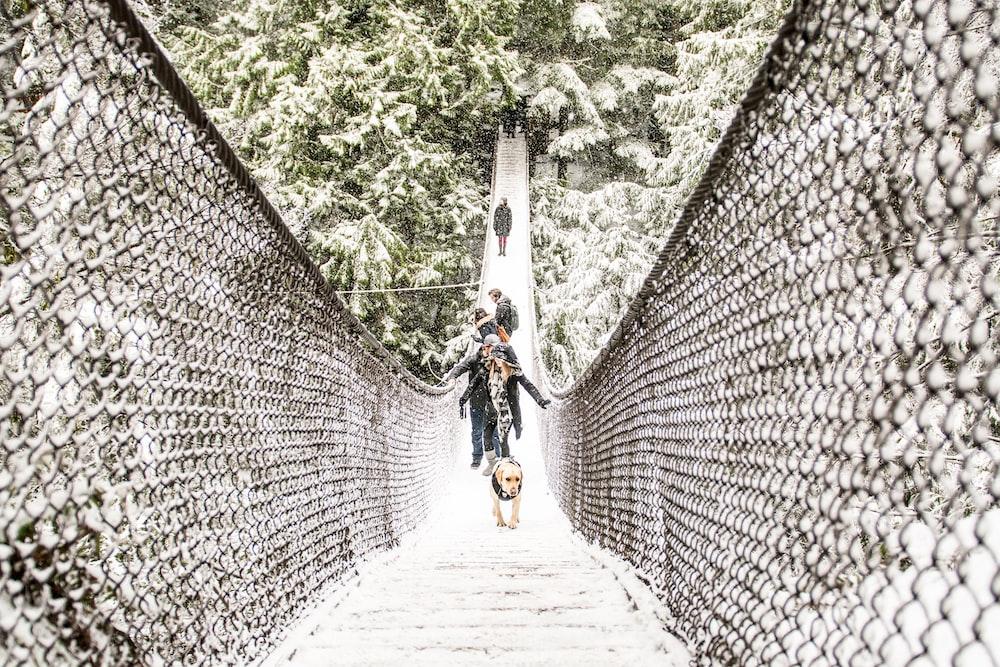 people walking on hanging bridge