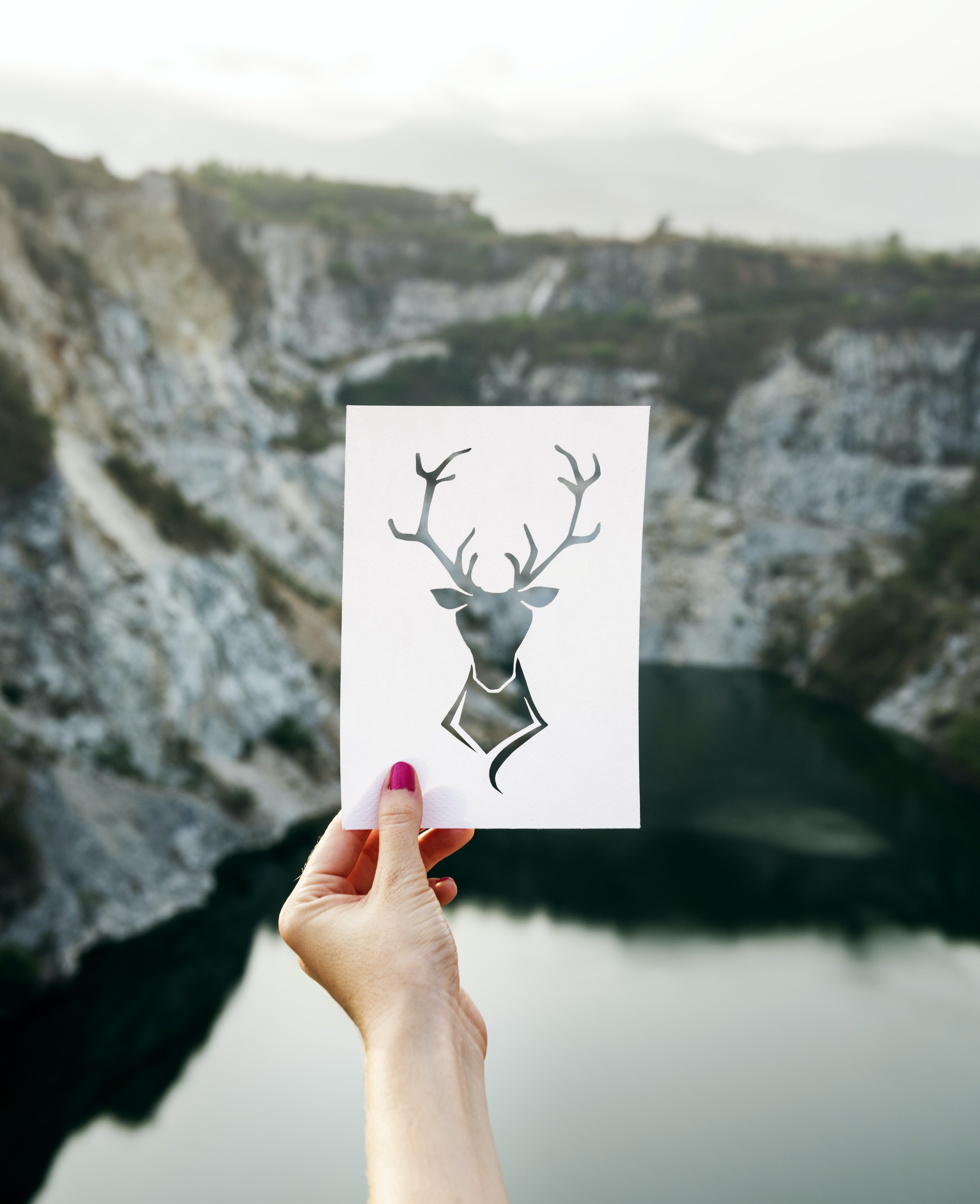 person holding photo of deer