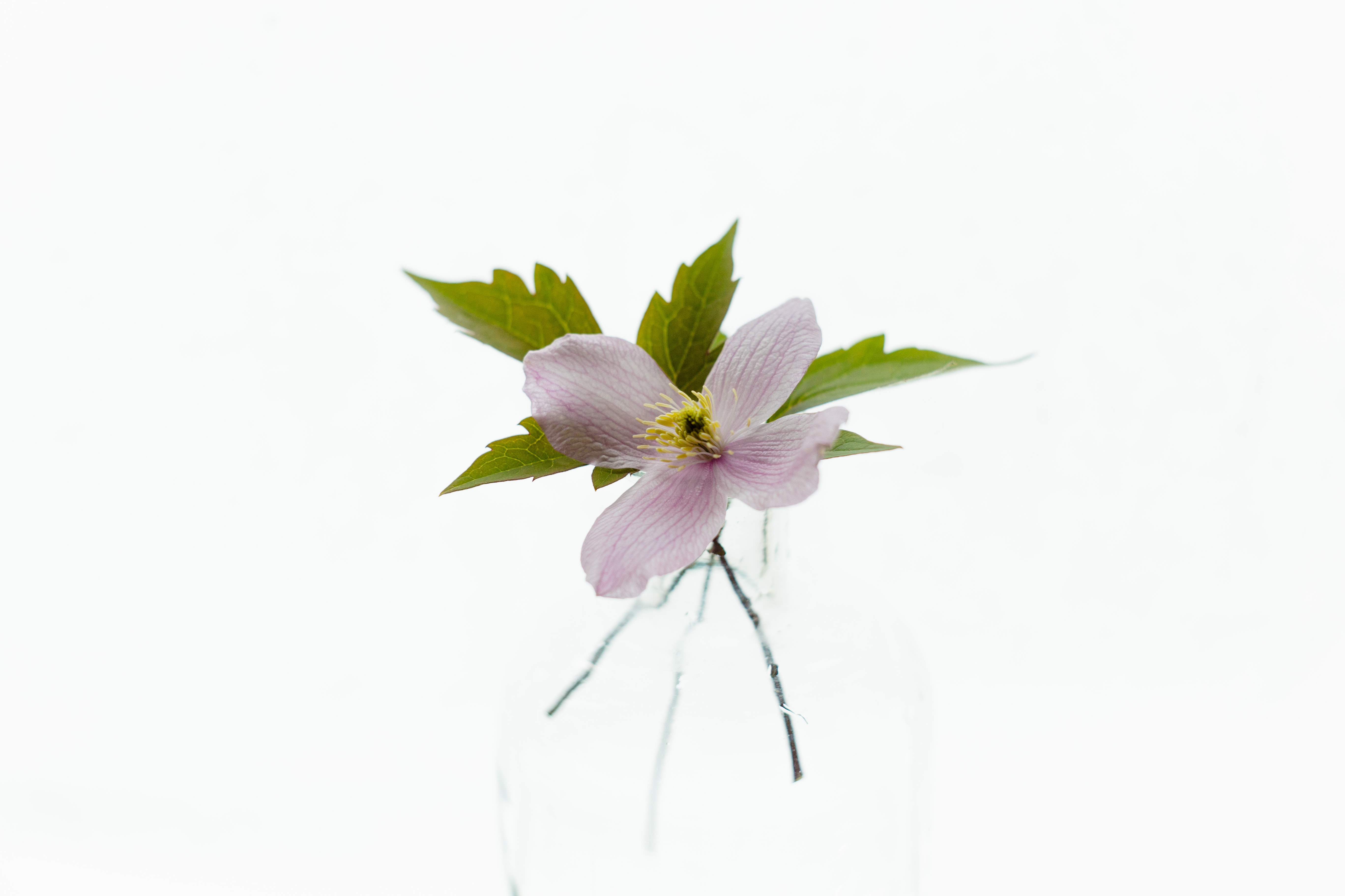 white background with pink flower