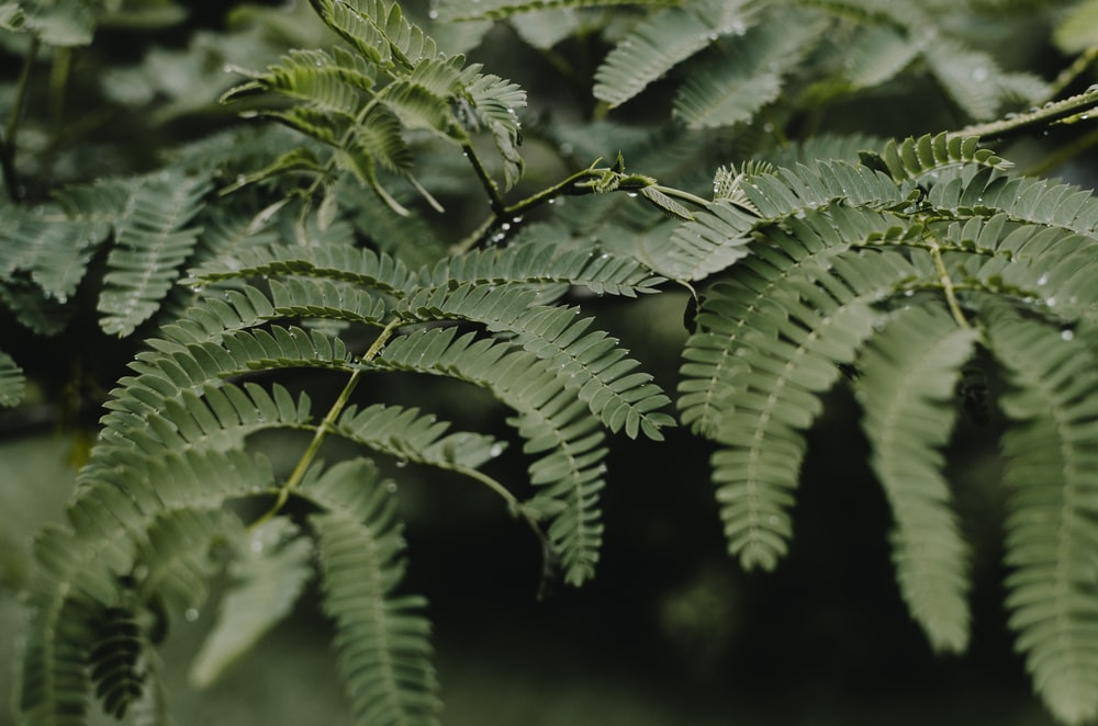 selective focus photography of green leaves on branch
