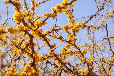 kwiaty-na-drzewie