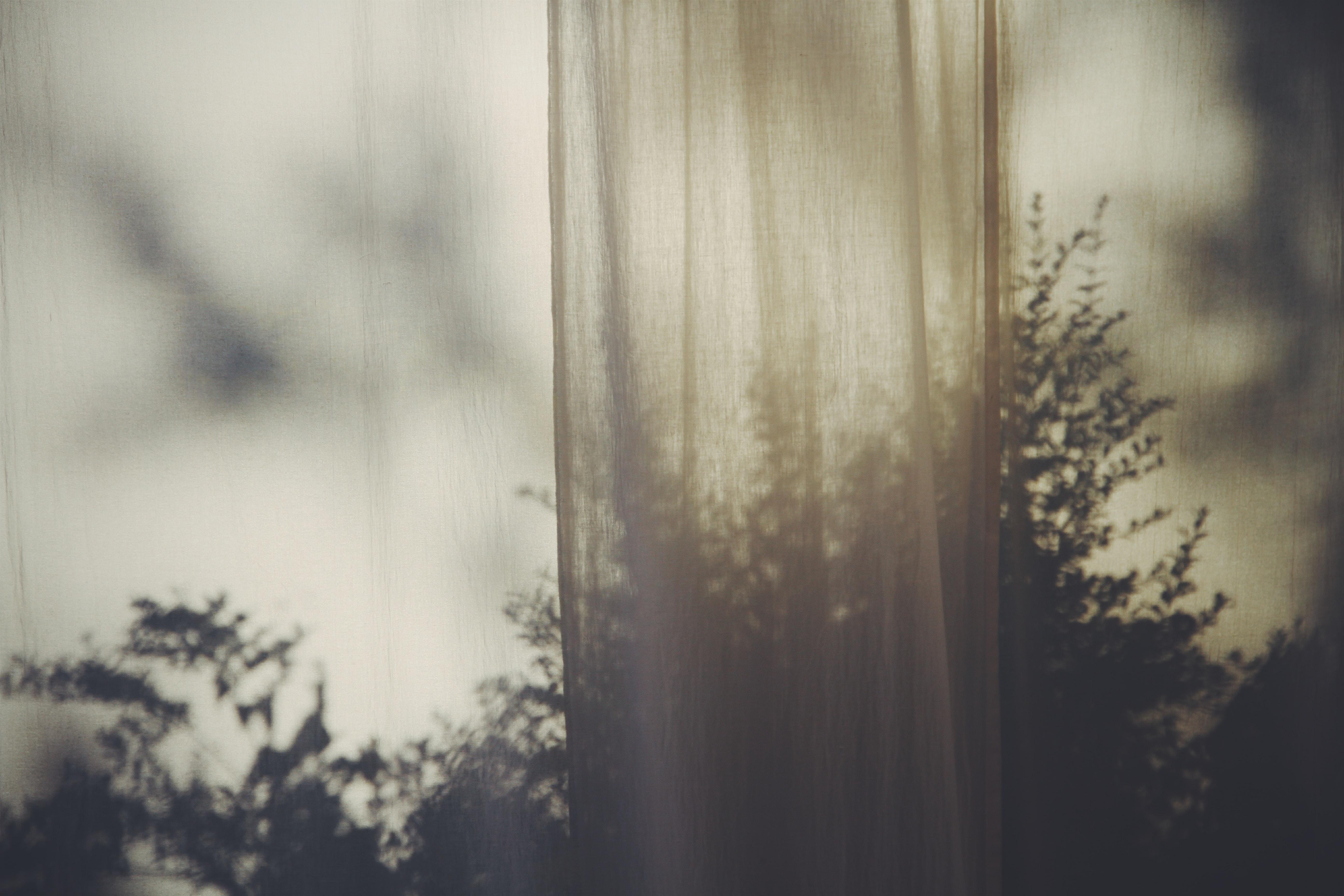 mesh curtain near tree