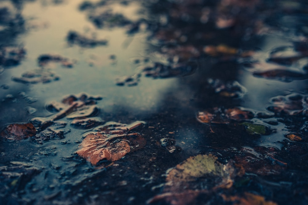 withered leaves floating on body of water